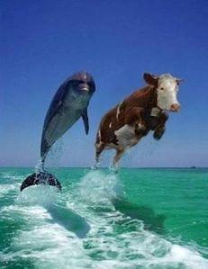 vache-et-dauphin-copie-1.jpg