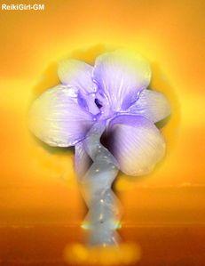 Orchidée sur fond jaune-RG-GM