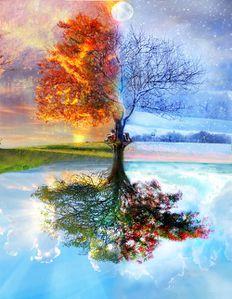 gif arbre 4 saisons
