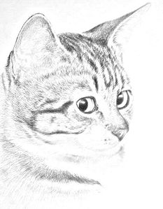 Dessin-le-chat.jpg