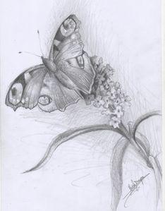 papillon.jpeg