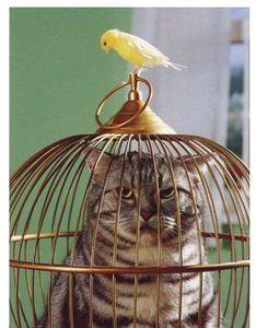 cage-oiseaux[1]