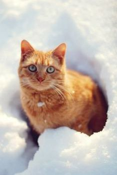 chat-neige-fb-14.jpg