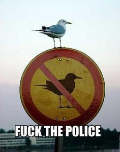 rebellious-bird-z5bbc.jpg