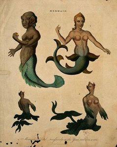 Sirènes -1817-copie-1