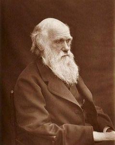 Darwin (3)