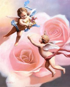 chiu-t-c-cherubs-rose