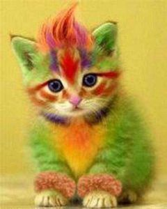 chat-colore.jpg