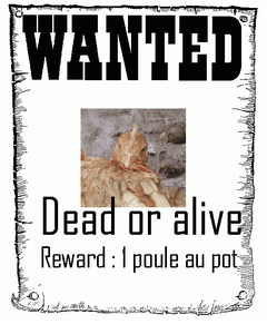 affiche-poule-wanted.png