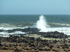 04 Skeleton coast - Cape Cross 04