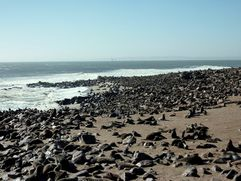 04 Skeleton coast - Cape Cross 08