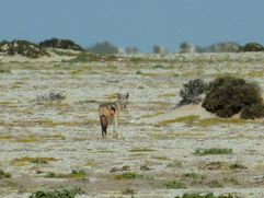 04 Skeleton coast - Henties Bay 05