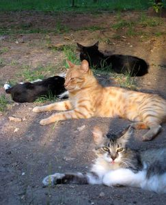 chats-repos-animaux.jpg