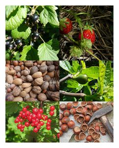 montage-petits-fruits-BB-sign-red.jpg