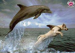 chien dauphin