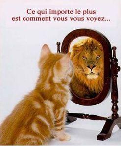 chat-lion.jpg