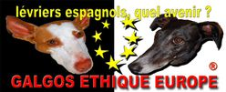 galgos-ethique-europe-we800