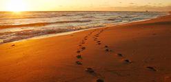Traces-de-pas-sur-le-sable2 (1)