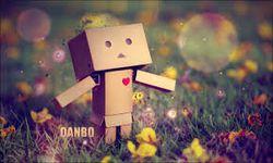 danbo-4.jpg