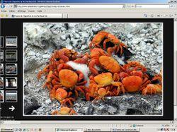 crabes de clipperton