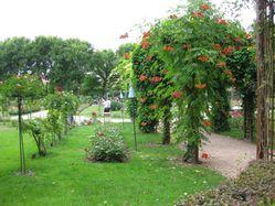 Au-jardin-.-2826.JPG