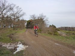 RANDO VTT 2010 003-copie-1