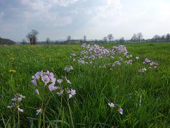 prairie-fleurie.jpg
