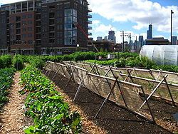250px-New crops-Chicago urban farm