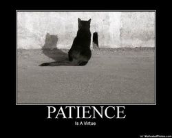 patience chat
