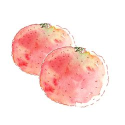 illustration pomelo à l'aquarelle