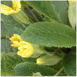 fleur mars 6
