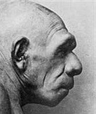 neandertal-crane-rase.jpg