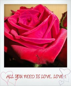 rose-all-you-need-is-love.jpg
