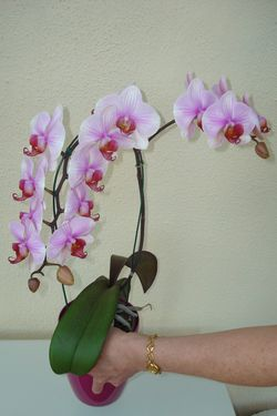 orchidée-copie-1