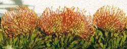 Legerete---Proteas.jpg