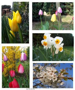 Fleurs avril