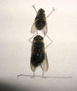 dead_flies_art_12.jpg