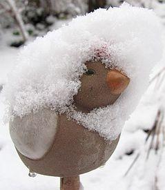 neige1 19 dec 11
