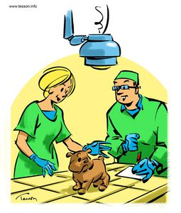 illustration-veterinaire.jpg