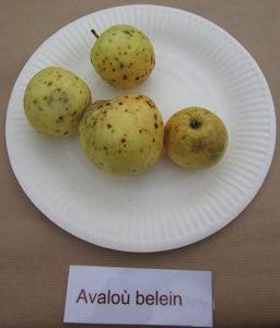 133 r Avalou belein