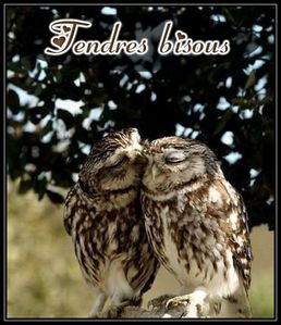 tendre-bisous