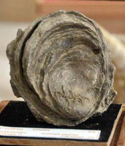 Geologie-DSC 0045
