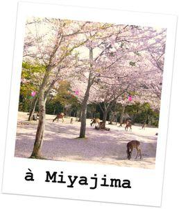 sakura miyajima 1102251305