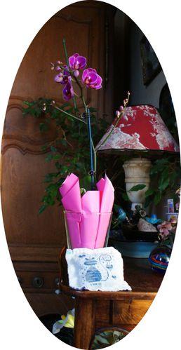 Orchidee-de-ladie-boop.jpg