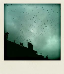 animal-oiseaux-1.jpg