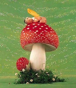 champignon [640x480]