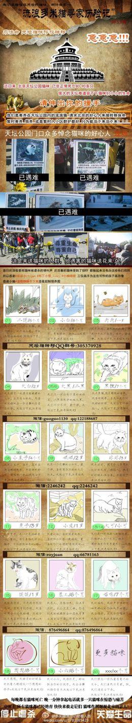 Les chats errants massacrés de Tiantan B