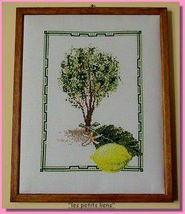 broderie citronnier 1pf