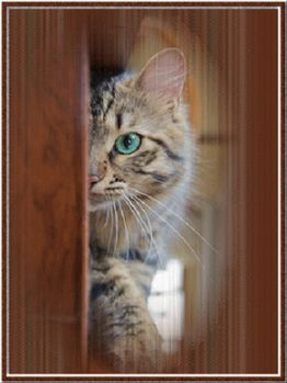 chat-coucou-avril-13.jpg