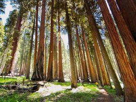 Californie sequoias 940x705